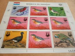 Sheetlet Paraguay 1985 Birds - Paraguay