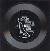 RARO Disco 33 1/3 (di Plastica) SONGS OF THE HUMPBACK WHALE, National Geografic, Gennaio 1979, (2 Facciate) - AM-V - Musik & Instrumente
