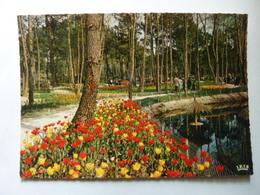 Parc Résidensiel De La Palmyre - Floralies - Ohne Zuordnung