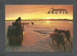 ANIMAUX - ANIMALS - QAUMMAARIIT HISTORIC PARK N.W.T. ATTELAGES DE CHIENS - 17 X 12 Cm - 6¾ X 4¾ Po - PHOTO NICK NEWBERY - Chiens