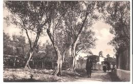 Sermione - Lago Di Garda V. 1926 (3429) - Autres Villes