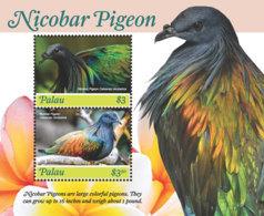 Palau 2018 Fauna Nicobar Pigeon I201901 - Palau