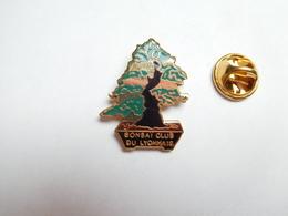 Superbe Pin's En EGF , Bonsaï Club Du Lyonnais , Arbre , Nature , Lyon , Rhône , Non Signé - Città