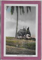 LES CAMBODGIENS  Et Leur Elephant - Cambodia