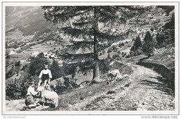 Quinto  / Catto / Lurengo (D-A174) - TI Ticino