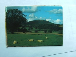 Engeland England Shropshire Landscapes With Sheep - Shropshire