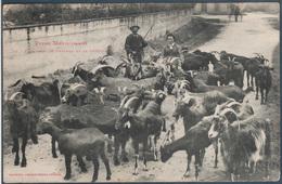 Troupeau De Chèvres Et Le Chevrier , Animé - Farmers