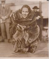 RACOON PET MILADY ATLANTIC CITY EVELYNNE GALE ZOO ANIMAUX ANIMALS ANIMALES   19 * 15 CM Fonds Victor FORBIN 1864-1947 - Fotos