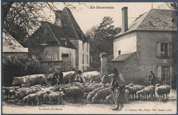 En Nivernais , La Sortie Du Bétail , Animée - Bourgogne