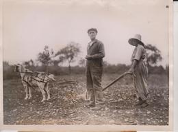 GOAT SCHENECTADY NEW YORK  FARM ATTELAGE CART ANIMAUX ANIMALS ANIMALES   20*15CM Fonds Victor FORBIN 1864-1947 - Profesiones
