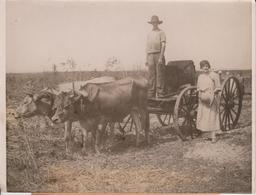 MAYOR MOOREHAVEN FLORIDA PHILADELPHIA ATTELAGE CART ANIMAUX ANIMALS ANIMALES   20*15CM Fonds Victor FORBIN 1864-1947 - Lugares