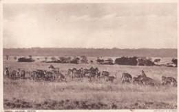 NAIROBI - ZEBRA - Kenya