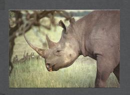 ANIMAUX - ANIMALS - BLACK  RHINOCÉROS - BY KASHMIR CRAFTS KENYA - Rhinocéros