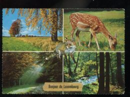 CPM Animaux Daim Renard Multi Vues - Tierwelt & Fauna