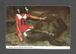 ANIMAUX - ANIMALS - TORTUE GÉANTE - GIANT TURTLES ARE ON DISPLAY ON CYPRESS POINT AT FLORIDA'S SILVER SPRIGS - Tortues