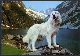 Chien Des Pyrénées - Hunde