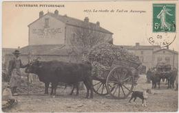 Cantal 15 ? LA RECOLTE DE L'AIL  ( Cachet Cantal 1909) - France