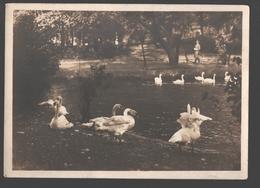 Hamburg - Schwanenwik - Fotokarte - Originalphoto Hans Hartz - Verlag Hans Andres - 1932 - Swan / Cygne - Deutschland