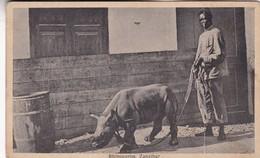 RHINOCEROS, ZANZIBAR. J B COUTINHO. CPA CIRCA 1910s - BLEUP - Tanzanie