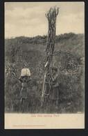 ZULU GIRLS Carrying Wood Native Black Ethnic. Photo By T.D.Ravenscroft  Rondebosch. Old Postcard SOUTH AFRICA 1900s - Afrique Du Sud