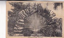 TRAVELLER'S PALM, ZANZIBAR. JB COUNTINHO. CPA CIRCA 1910s - BLEUP - Tanzanie