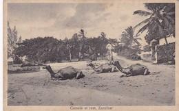 CAMELS AT REST, ZANZIBAR. JB COUNTINHO. CPA CIRCA 1910s - BLEUP - Tanzanie