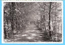 Belgique-Couvin-+/-1938-Parc St-Roch-La Charmille Le Long Du Lac-Edit.Institut St.Joseph, Frères Maristes-rare - Couvin