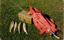 Fishing Day's Catch Walleye Pike 1954 - Fishing