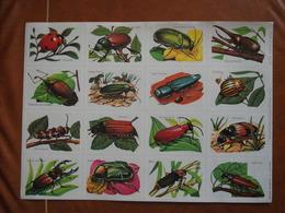 Planche éducative Volumétrix - N°9 - Insectes - Fiches Didactiques