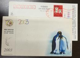 China 2003 New Year Greeting Pre-stamped Card Antarctic Penguin 1 - Antarctic Wildlife