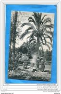 LIBYE-Palmeraie Dans L'oasis- Femmes Cuisinant-a Voyagé En 1908-afft Semeuse Cad Tripoli  De Barbarie - Libyen