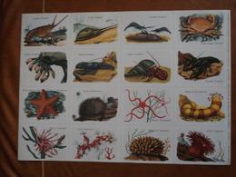 Planche éducative Volumétrix - N°47 - Les Crustacés, Les Echinodermes Et Les Coelentérés - Books, Magazines, Comics