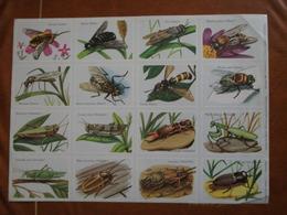 Planche éducative Volumétrix - N°51 - Insectes (Diptères Et Orthoptères) - Bücher, Zeitschriften, Comics