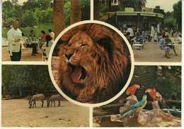 Tunisia / Tunis - Le Parc Du Belvedere - Animals,parrots,lion,animals,ZOO - Tunisie