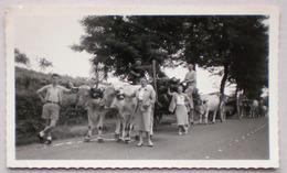 31 SAINT MARTORY Via TOULOUSE 1951 ATTELAGE BOEUFS Convoi Sur Route Animée - Photo Agriculture Boeuf - France