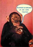 Animaux - Singes - Carte Humoristique - Voir Scans Recto-Verso - Singes