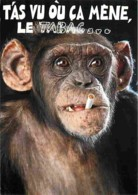Animaux - Singes - Chimpanzés - Carte Humoristique - Voir Scans Recto-Verso - Singes