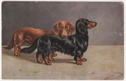 CANE BASSOTTO - BASSET SAUSSAGE DOG COPERTINA SIGARO Teckel Dachshund TSN 1860 - Dogs