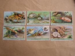 LIEBIG Les Céphalopodes Pieuvre Seiche Ammonites Nautile Marine Mer Série De 6 Chromos Trading Cards Chromo - Liebig
