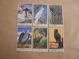 LIEBIG Les Perroquets Ara Cacatoès Jaco Oiseaux Série De 6 Chromos Trading Cards Chromo - Liebig