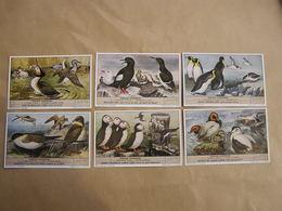 LIEBIG Oiseaux Plongeurs Oiseau De Mer Manchot Macareux Guillemot Série De 6 Chromos Trading Cards Chromo - Liebig