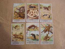 LIEBIG Les Insectivores Hérisson Taupe Tanrec Musaraigne Animaux Série De 6 Chromos Trading Cards Chromo - Liebig