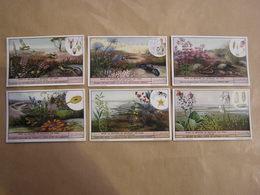 LIEBIG Dans La Bruyère En Ouvrant Les Yeux Animaux Fleurs Plantes Botanique  Série De 6 Chromos Trading Cards Chromo - Liebig
