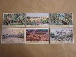 LIEBIG Le Parc National Albert Congo Belge Série De 6 Chromos Trading Cards Chromo - Liebig