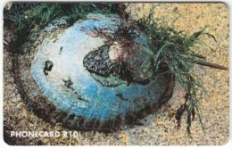 SOUTH AFRICA A-265 Chip Telkom - Animal, Sea Life, Shell - Used - South Africa