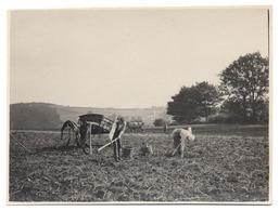 LIERNEUX 1926 Travaux Des Champs En Automne Arrachage Des Pommes De Terre Animée Attelage - Culture Patates - Photo Foto - Lierneux