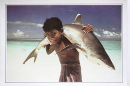 Maldives Requin à Pointe Blanche - Maldives