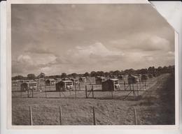 HOMES FOR CHICKENS CODALMING SURREY   SEE CORNER  20*15CM Fonds Victor FORBIN 1864-1947 - Profesiones