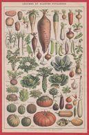 Légumes Et Plantes Potagères. Légume. Illustration Adolphe Millot. Recto-verso. Larousse 1920. - Vieux Papiers