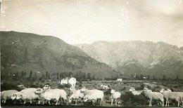 PAISAJE CON OVEJAS Y MONTAÑAS DE FONDO. ARGENTINA POSTAL CPA CIRCULEE CIRCA 1920's - LILHU - Argentina